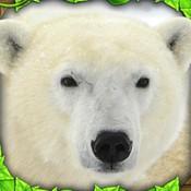 终极北极熊模拟器
